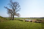 picture of dike  - Bare trees at the foot of a dike in the foreground of an agricultural area in the Netherlands - JPG