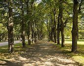 Pavlovsk, Linden alley