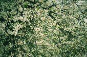 Plum vintage flowers