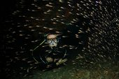 Scuba diver swims through fish