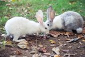 Gray And White Rabbits On Green Grass