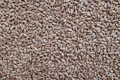Hulled Sunflower Seed Hearts