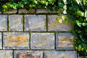 Stone Wall With Ivy And Moss