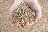Handful Of Coarse Sand