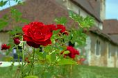 Red rose and a medieval church