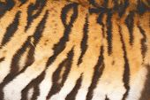 Beautiful Tiger Fur With Vintage Effect