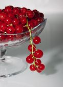Red Currant On A Gray Background In A Vase And One Bunch Of Currants Hanging