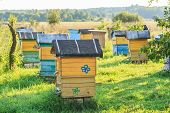 Summer Apiary With Several Hives