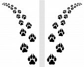 footstep of dog
