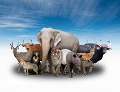 stock photo of herbivore animal  - group of asia animals with blue sky - JPG