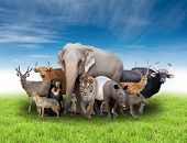 pic of herbivore animal  - group of asia animals with fresh green grass and blue sky - JPG