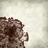 foto of carnation  - textured old paper background with variegated carnation flower - JPG