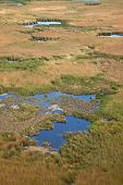 stock photo of swamps  - Detail of a swamp wet landscape - JPG