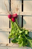 image of radish  - Fresh radishes on wooden box in garden top view - JPG