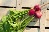 picture of radish  - Fresh radishes on wooden box in garden - JPG