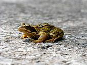 A toad sitting on a road