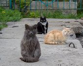 picture of homeless  - Three cats left homeless shelter in search of food - JPG