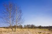 foto of early spring  - Country view from the birch trees in early spring  - JPG