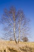 image of early spring  - Country view from the birch trees in early spring - JPG
