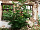 picture of abandoned house  - European abandoned house closeup was overgrown with bushes and trees - JPG