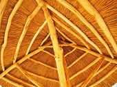 image of bottom  - The roof is made of yellow cane  - JPG