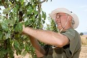 Farmer working in an orchard