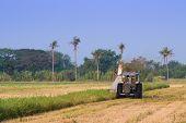 Постер, плакат: Harvester machine to harvest rice field working Combine harvester agriculture machine harvesting ri