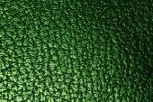 Green leathery texture