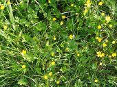 A Meadow In Summer