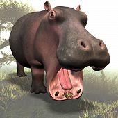 Hippo # 03