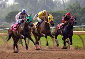 Corridas de cavalos