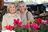 picture of niece  - Mother and daughter at the market - JPG