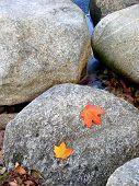 Fall Leaves On Rock