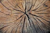 seção transversal de log de eucalipto