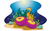 illustration of a colorful reef element