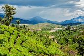 Green tea plantations in hills with dramatic sky. Munnar, Kerala, India poster