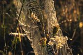 Spider Web Nature Background. Nature Background Of Spider Web In Meadow Sunrise. Spider Web Nature B poster