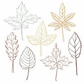 Set Of Autumn, Fall Leaves - Oak, Maple, Birch, Aspen, Hand-drawn Outlines, Vector Illustration Isol poster