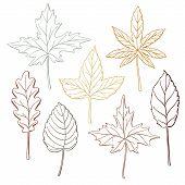Set Of Autumn, Fall Leaves - Oak, Maple, Birch, Aspen, Hand-drawn Outlines, Vector Illustration Isol poster