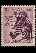 South Africa Postage Stamp Mountain Zebra 1954