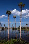 Wet Wetlands
