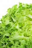 picture of escarole  - closeup of an escarole endive - JPG