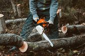 A Man Sawing A Tree With A Chainsaw. Removes Forest Plantations From Old Trees, Prepares Firewood. poster