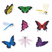 Dragonflies And Butterflies Illustrations Set. Insects With Bright Color Wings Vector Clipart. Isola poster