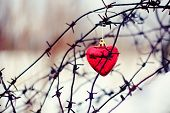image of perception  - Heart and barbed wire. Love symbol. Barbed Wire.