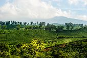 Latin American Coffee Plantation