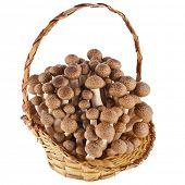 Shimeji mushroom in the basket isolated on white
