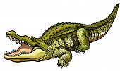 image of crocodile  - nile crocodile - JPG