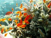 coral reef with stony coral and hard corals at the bottom of tropical sea