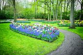 Park With Multicolored Tulips